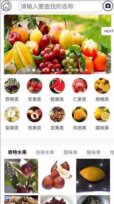 水果百科 圖4